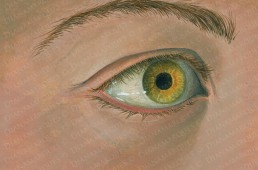 acrylic illustration of human eye
