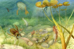acrylic illustration of the bottom of a pond with most common animal and plant species