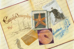 watercolor trompe l'oeil representing objects related to Portuguese king D. Carlos I