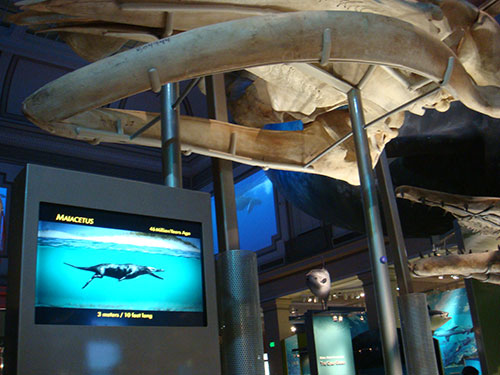 Sant Ocean Hall at the Smithsonian's NMNH