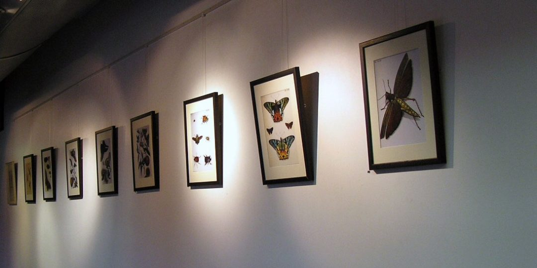 Exhibition Insects and Art Sherwell Center University of Plymouth