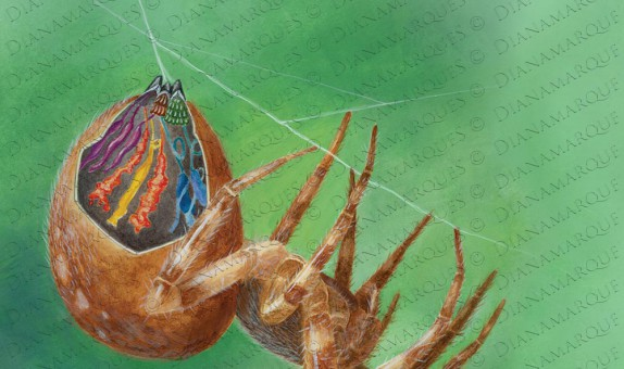 acrylic illustration of cut out of garden spider abdomen to reveal the silk glands