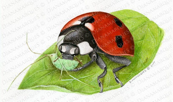 watercolor illustration of ladybug eating an aphid