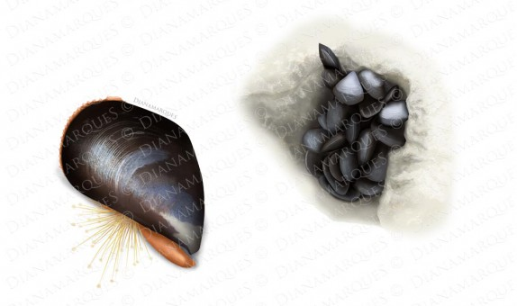Digital illustration of one mussel and group of mussels