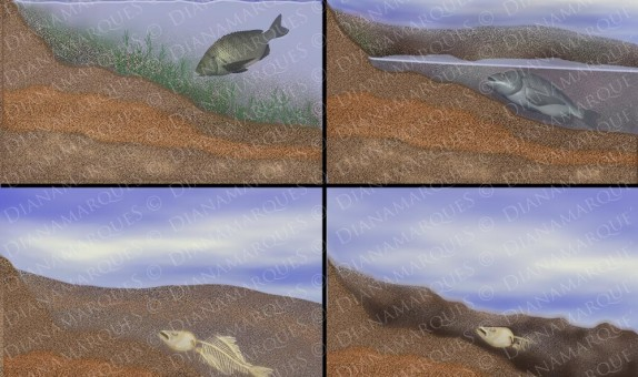 textbook representation of the process of fossilization