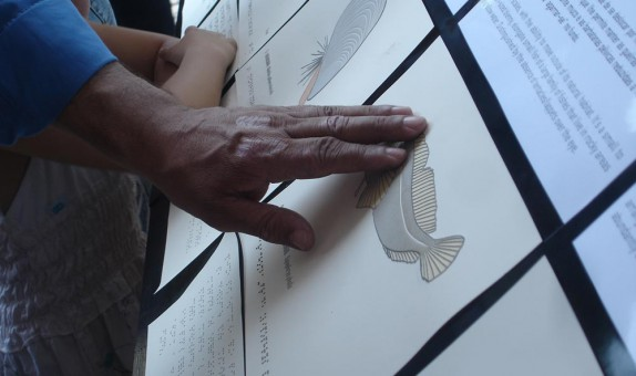 Photograph of blind person touching raised-line illustration