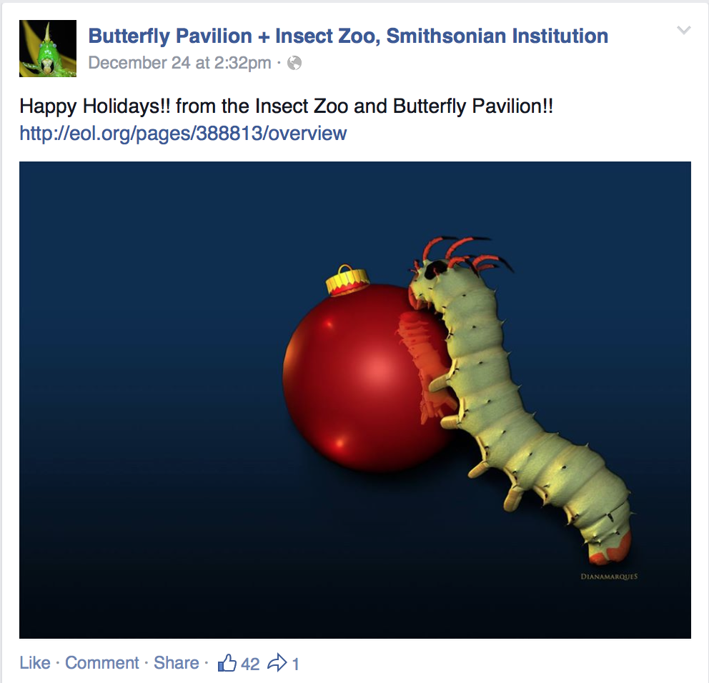 Insect Zoo Christmas Card