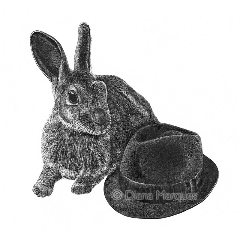 traditional illustration of hat and rabbit © Diana Marques