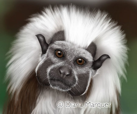 2012 United Nations Stamp Series Endangered Species - Cotton Headed Tamarin ©Diana Marques