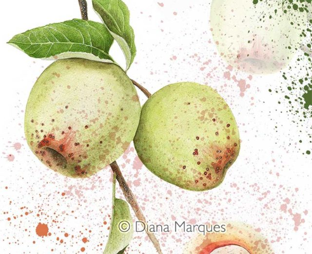 digital illustration of an agricultural pest © Diana Marques