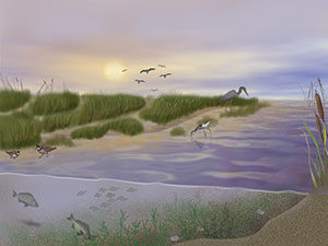 textbook illustration of above and underwater of a marsh ecosystem ©Diana Marques