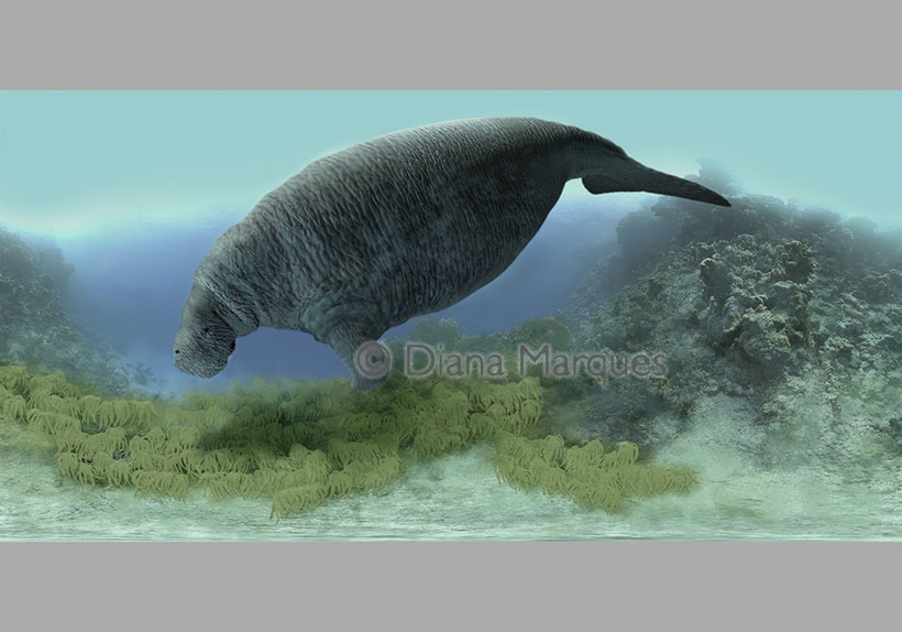 digital illustration of a sea cow © Diana Marques