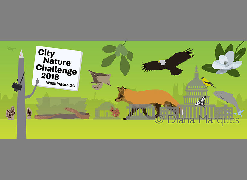 City Nature Challenge 2018 Washington DC