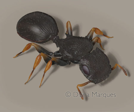 Digital 3D model of a Sculpted Tree Ant ©Diana Marques